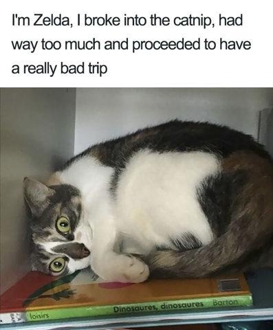 Bêtises de chat