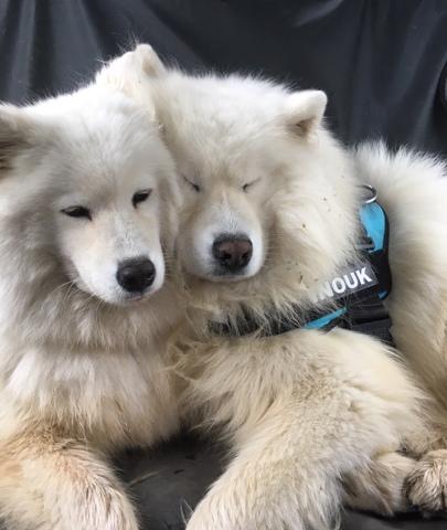 Les plus beaux chiens de Wamiz