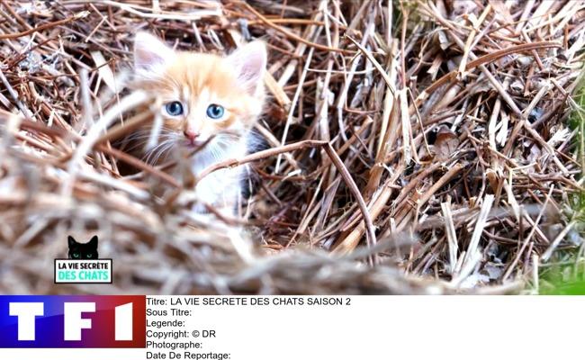 La vie secrète des chats - saison 2