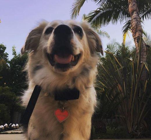 Johnny Hallyday : sa chienne Cheyenne a son propre compte Instagram et c'est Jade qui s'en occupe