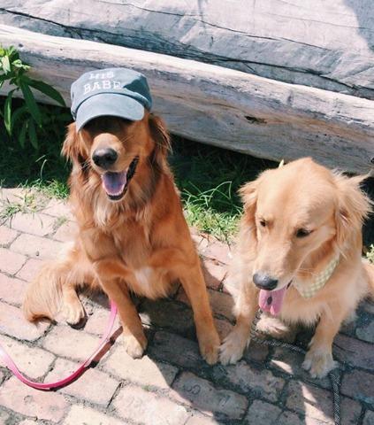 Penny et Banjo