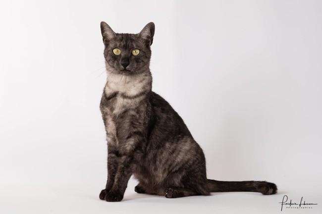 Concours Général Agricole des chats de race 2019