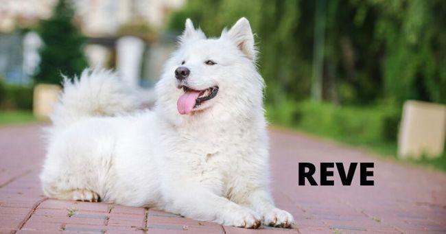 10 noms de chiens en R pour 2020
