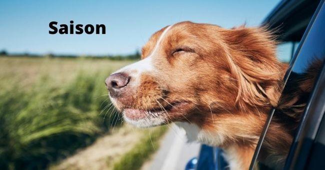 Noms de chiens en S pour 2021