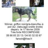 Chien Bleu de Gascogne Winner