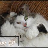 Chat Gouttière Mimie