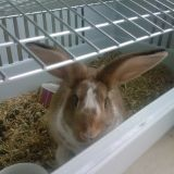 Rongeur Lapin Choupinette