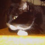 Miss Fiby
