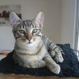 Chat Aslan