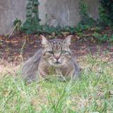 Chat Gouttière Azote