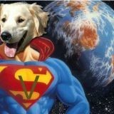Chien Manchester Terrier