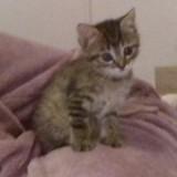 Chat Bébé Crevette  Olie