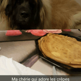 Chien Leonberger Betsy