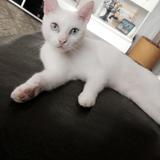 Chat Blanchette