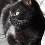Chat Gouttière Cachou