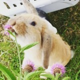 Rongeur Lapin Canaille