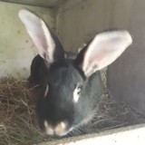 Rongeur Lapin Chèvrefeuille