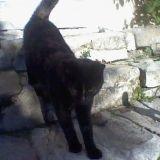 Chat Lypso