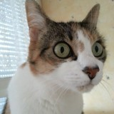 Chat Minette