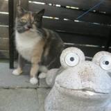 Chat Mémère