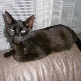 Chat Félix