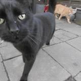 Chat Nino Et Stitch