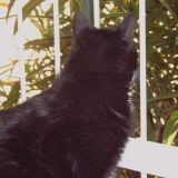 Chat Miss Fiby