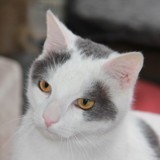 Chien Theodore Chat Blanc Ronds Gris
