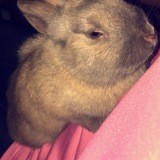 Rongeur Lapin Choupette