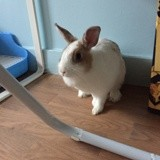 Rongeur Lapin Cooky