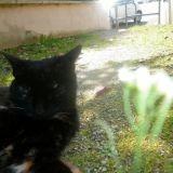Chat Gouttière Fripouille