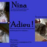 Chat Gouttière Nina
