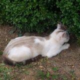 Chat Gouttière Ficelle