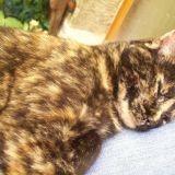 Chat Gouttière Lilou