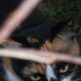 Chat Gouttière Dora