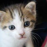 Chat Gouttière Ruby
