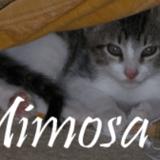 Chat Gouttière Mimosa