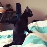 Chat Gouttière Hella