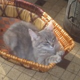 Chat Gouttière Timur