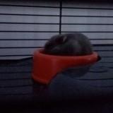 Rongeur Hamster Bat