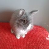 Rongeur Lapin Gucci
