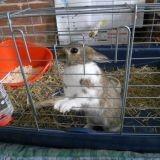 Rongeur Lapin Cassidy