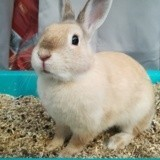 Rongeur Lapin Bluebell