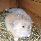 Rongeur Lapin Fenouil