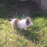 Rongeur Lapin Dooby