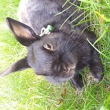 Rongeur Lapin Shadow