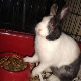 Rongeur Lapin Toy