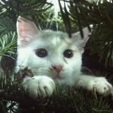 Chat Lou