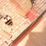 Rongeur Hamster Loulou