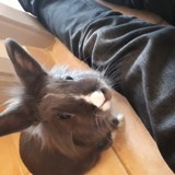 Rongeur Lapin Louloute